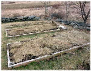 Raised garden beds with a fresh load of manure compost and hay