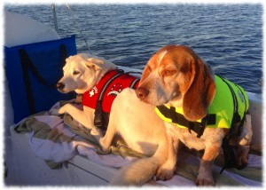 Targa and Tucker enjoying the early morning sun as we motor towards home while Susanna sleeps below.
