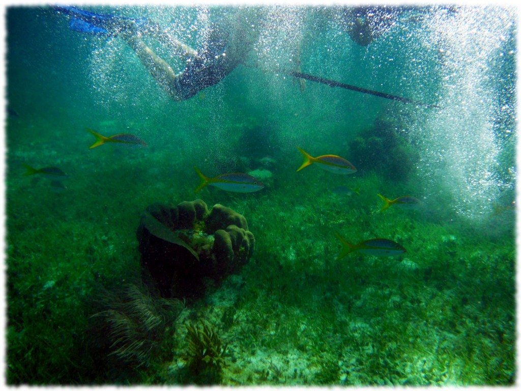 One of the may underwater sights that Ben and I saw on our snorkeling adventure.